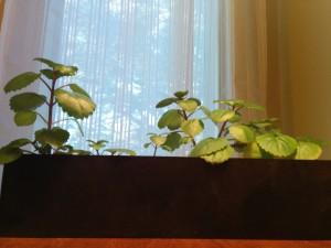 Office plant by window